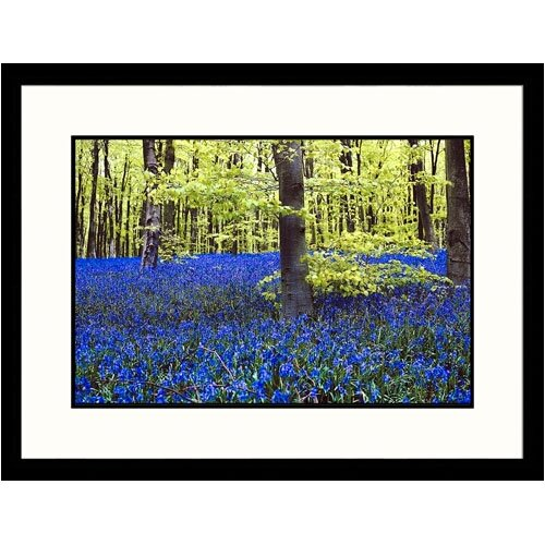 Florals Trees and Flowers in Forest Framed Photographic Print