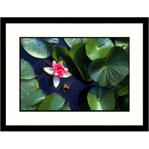 Great American Picture Florals Water Lily Japan Framed Photographic Print