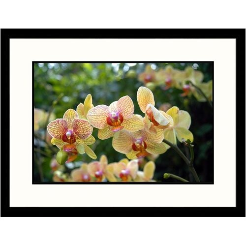 Great American Picture Florals Orchid Framed Photographic Print