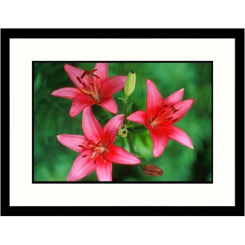 Great American Picture Florals Pink Day Lilies Framed Photographic Print