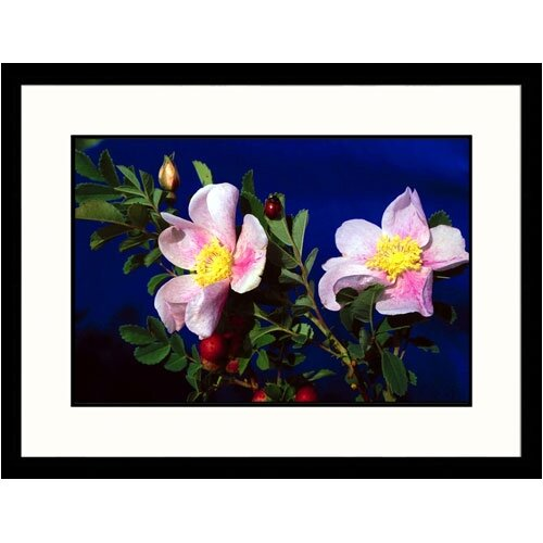 Florals Wild Roses Framed Photographic Print