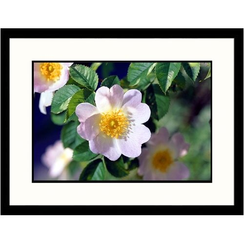 Great American Picture Florals Dog Rose Framed Photographic Print