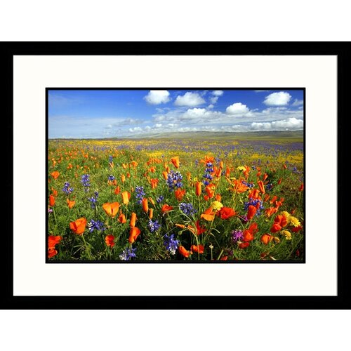 Great American Picture Landscapes Carrizo Plain National Monument California Framed Photographic Print