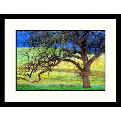 Great American Picture Landscapes Oak Tree California Framed Photographic Print