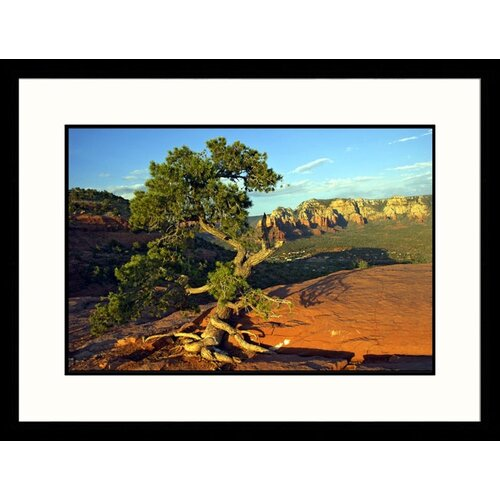 Great American Picture Landscapes 'Gnarled Tree, Airport Mesa Vortex' by Pat Canova Framed Photographic Print