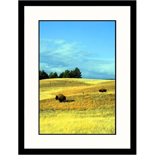 Great American Picture Landscapes 'Bison Wind Cave National Park, South Dakota' by Allen Russell Framed Photographic Print