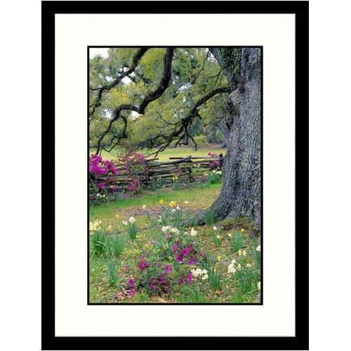 Great American Picture Landscapes 'Magnolia Plantation Garden, Charleston, South Carolina' by Jim Schwabel Framed Photographic Print