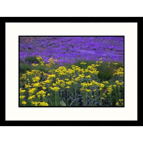 Great American Picture Landscapes 'Wildflowers Lassen Volcanic National Park' by Brian Maslyar Framed Photographic Print