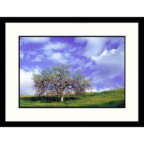 Landscapes 'Tree in Spring, California' by Mick Roessler Framed Photographic Print
