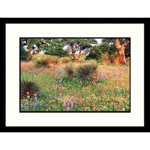Great American Picture Landscapes 'Bluebonnet, Scarlet Paintbrush and Yucca, Texas' by David Davis Framed Photographic Print