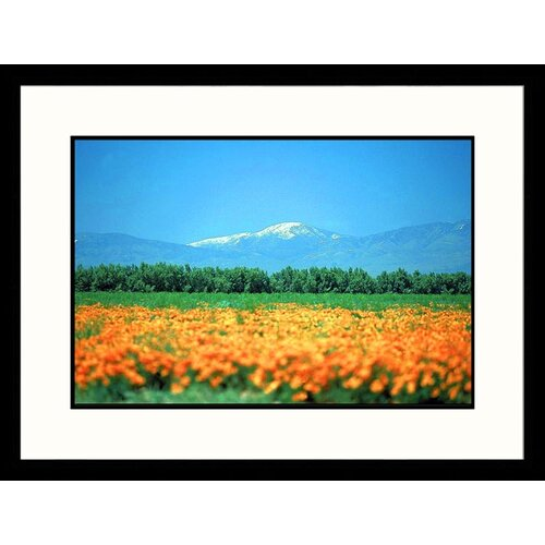 Great American Picture Landscapes 'California Valley Poppies' by Mark Segal Framed Photographic Print