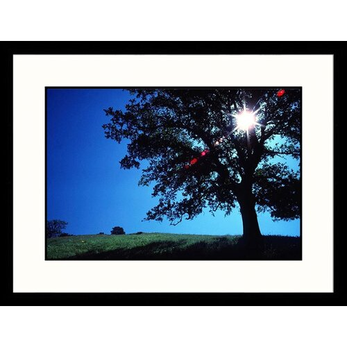 Landscapes 'Sun and Oak California' by David Carriere Framed Photographic Print