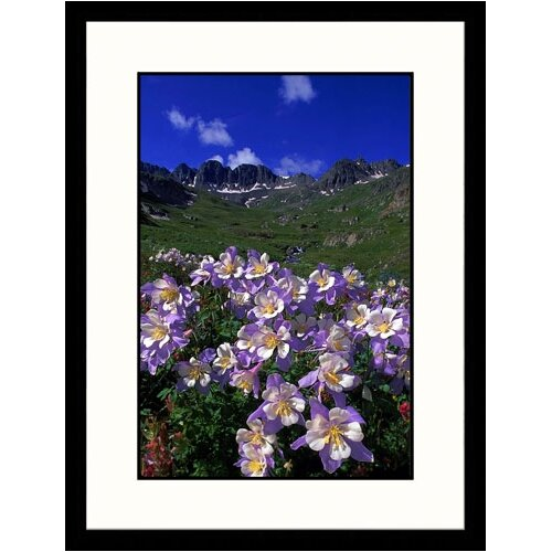 Landscapes 'Columbine Alpine Tundra, Colorado' by William Ervin Framed Photographic Print
