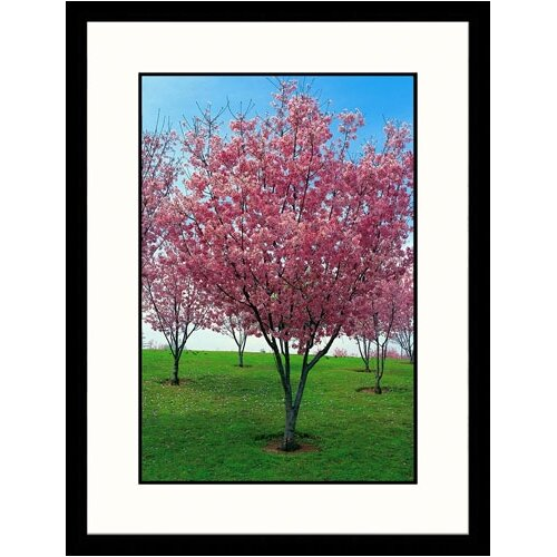 Great American Picture Landscapes 'Blossoms, Lake Balboa' by Claire Rydell Framed Photographic Print