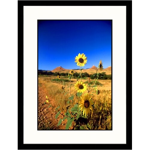 Great American Picture Landscapes 'Wild Sunflowers, South Dakota' by John Coletti Framed Photographic Print