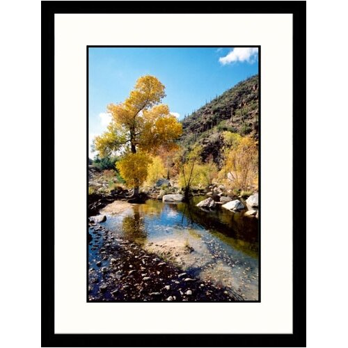 Great American Picture Landscapes 'Tree Sabino Canyon, Tucson, Arizona' by James Denk Framed Photographic Print