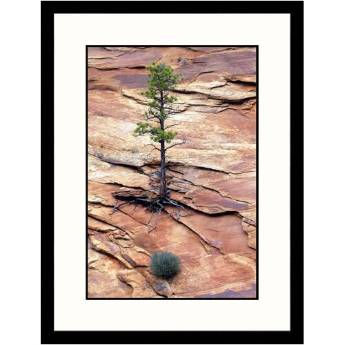 Landscapes 'Pinyon Pine, Zion National Park, Utah' by Jules Cowan Framed Photographic Print