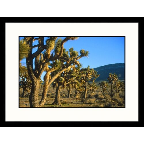 Landscapes 'Joshua Tree Forest Grand Canyon West, Arizona' by Jared McMillen Framed ...