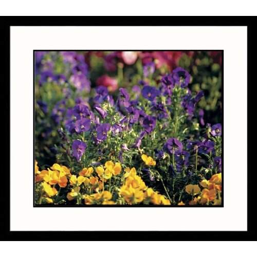 Great American Picture Landscapes Spring Glory Framed Photographic Print