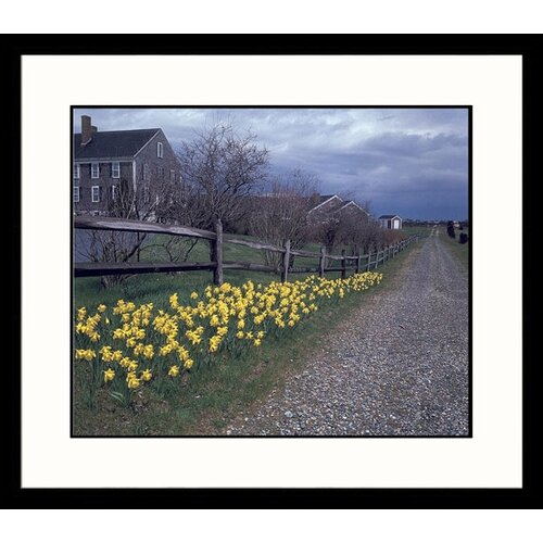 Great American Picture Landscapes Daffodils on Path Framed Photographic Print