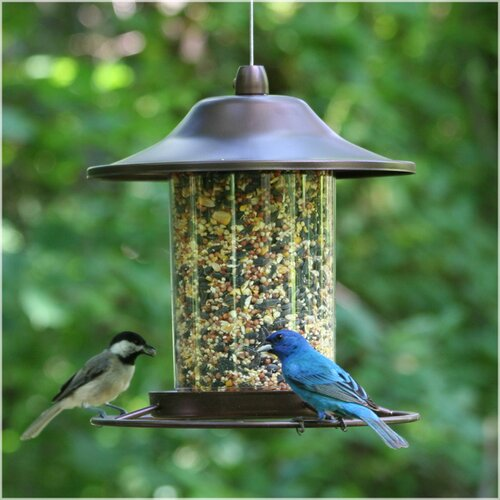 Perky Pet Panorama Hopper Bird Feeder & Reviews | Wayfair