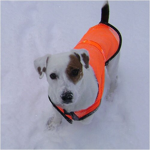 Reflective Pet Safety Vest