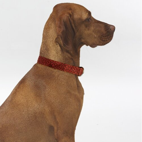 Triple Layer Bones Dog Collar