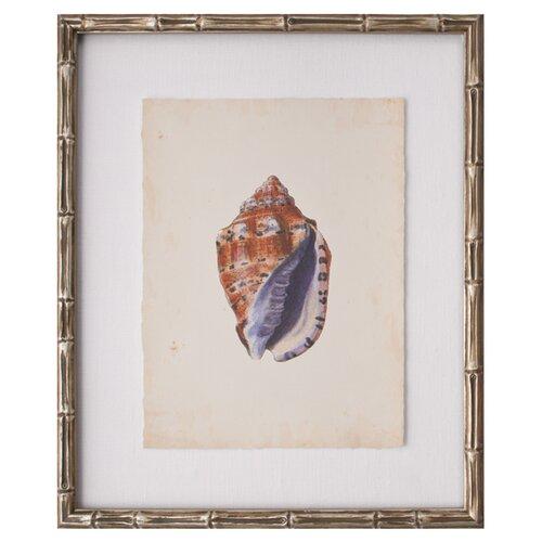 Mini SeaShells IV Framed Graphic Art