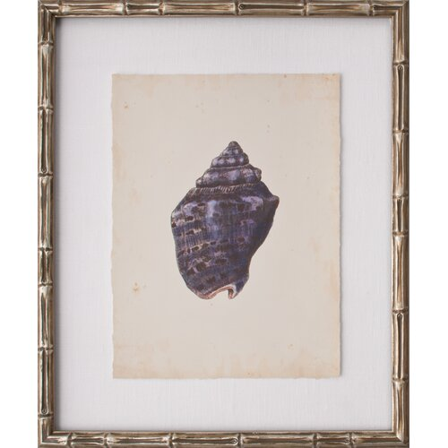 Mini SeaShells III Framed Graphic Art
