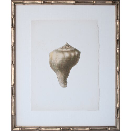 Vintage Shell III Framed Graphic Art