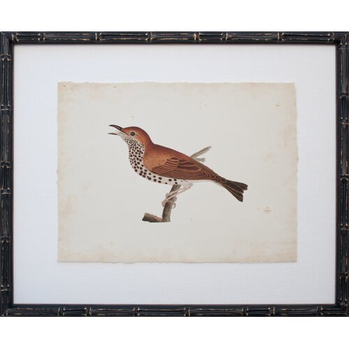 Mirror Image Home Vintage Bird I Framed Graphic Art
