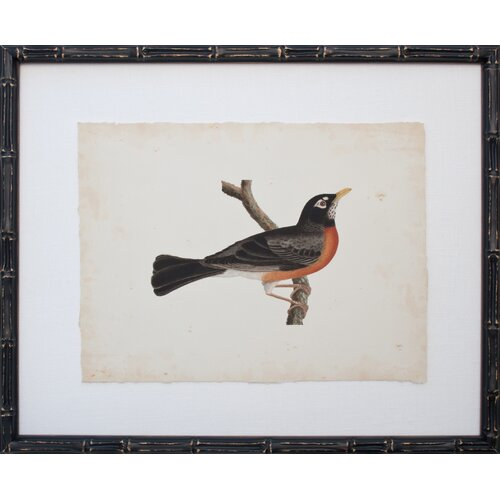 Vintage Bird III Framed Graphic Art