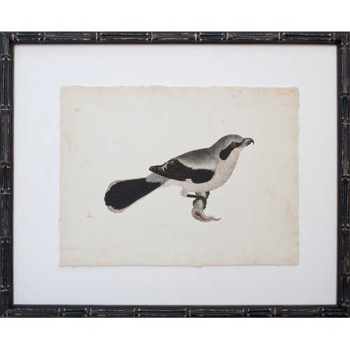 Vintage Bird IV Framed Graphic Art