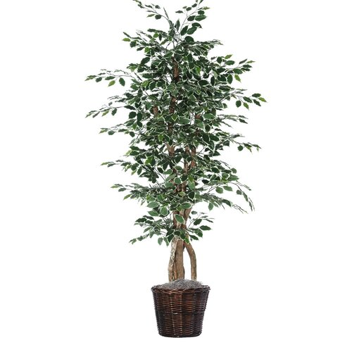 Vickerman Co. Executive Artificial Potted Natural Variegated Ficus Tree in Basket