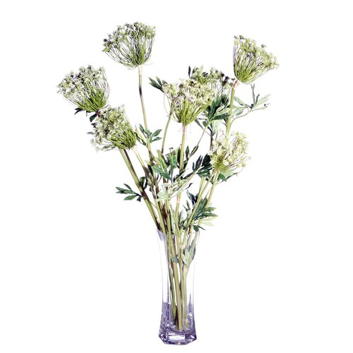 Vickerman Co. Floral Queen Anne's Lace