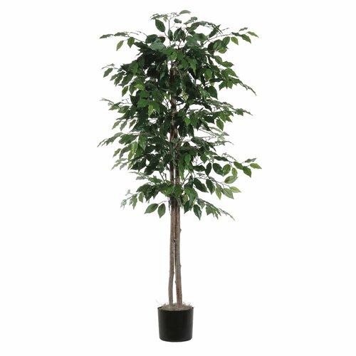 Vickerman Co. Nisswa Berry Ficus Tree in Pot