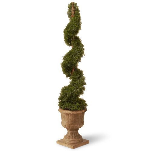 Cedar Spiral Tree in Urn