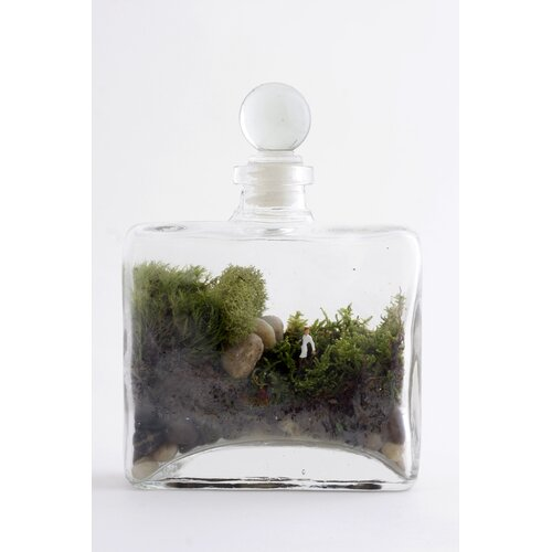 Twig Terrariums Tropisma Female Desk Top Plant in Terrarium