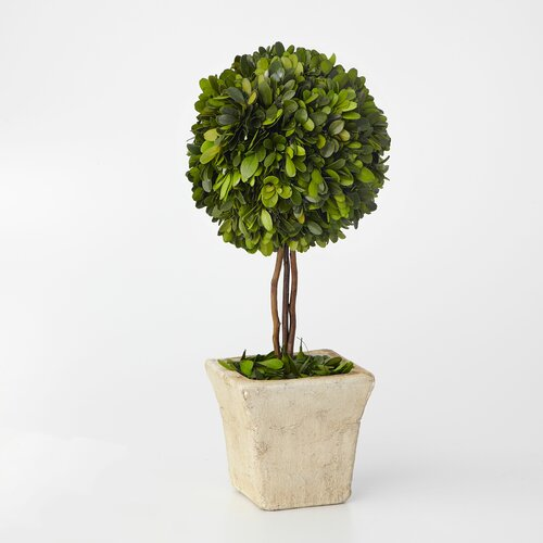 Sage & Co. Boxwood Topiary in Pot