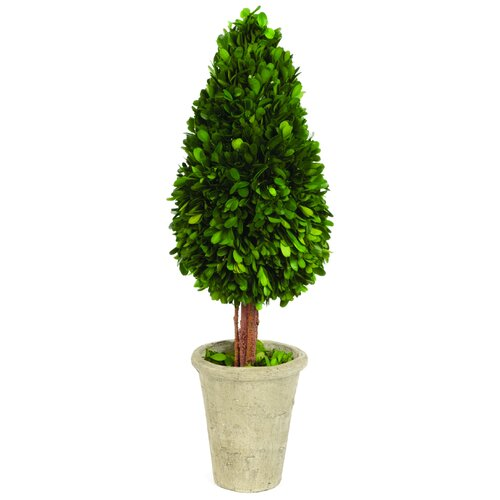 Sage & Co. Water Drop Shaped Boxwood Topiary in Planter