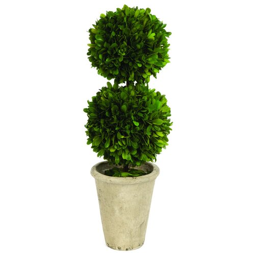 Sage & Co. Double Ball Boxwood Round Tapered Topiary in Planter