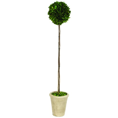 Sage & Co. Preserved Boxwood Ball Round Tapered Topiary in Pot