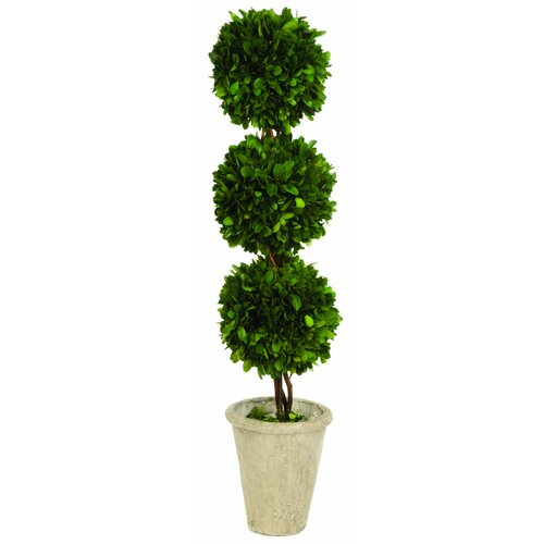 Sage & Co. Triple Ball Topiary in Planter