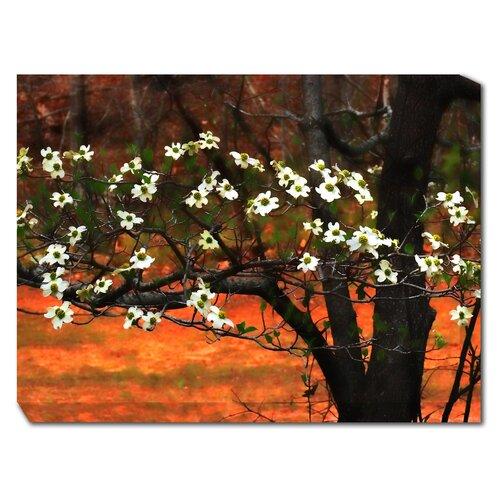 Dogwood At Sunset Photographic Print on Canvas