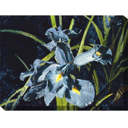 Lavendars Photographic Print on Canvas