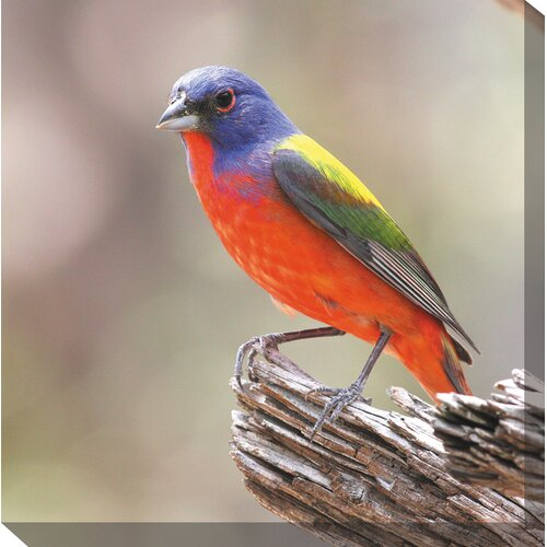 West of the Wind Outdoor Canvas Art Painted Bunting Photographic Print on Canvas