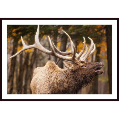 'Elk in the Forest' by Carson Ganci Framed Photographic Print