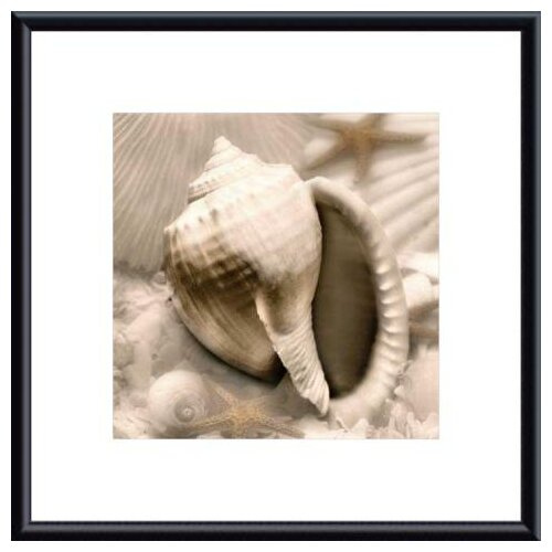 Iridescent Seashell III by Donna Geissler Framed Photographic Print