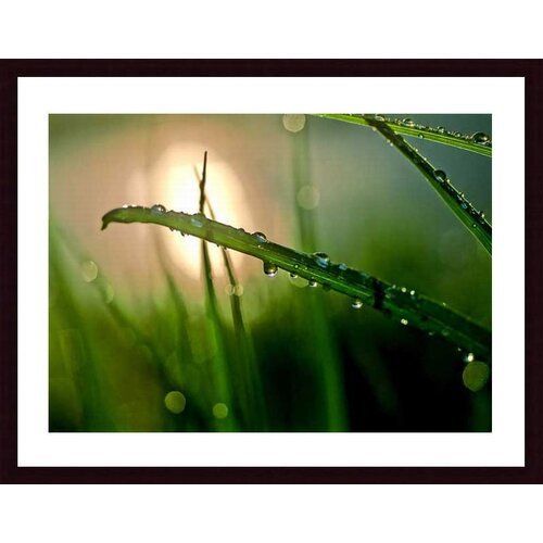 Barewalls 'Morning Dew' by John K. Nakata Framed Photographic Print
