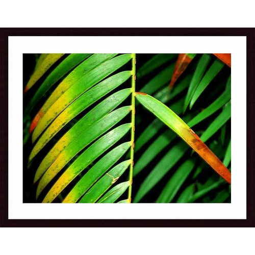 'Colorful Palm Leaf' by John K. Nakata Framed Photographic Print